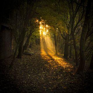Autumn-Magic